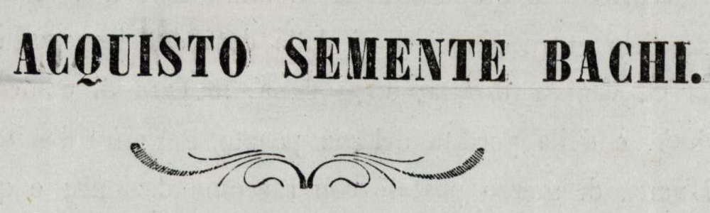 1858. Sementi di bachi da seta.